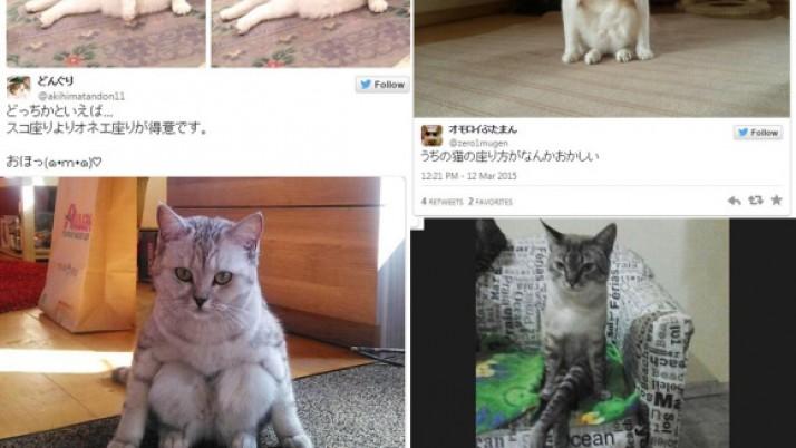 Los gatos que se sientan raro revolucionan la web